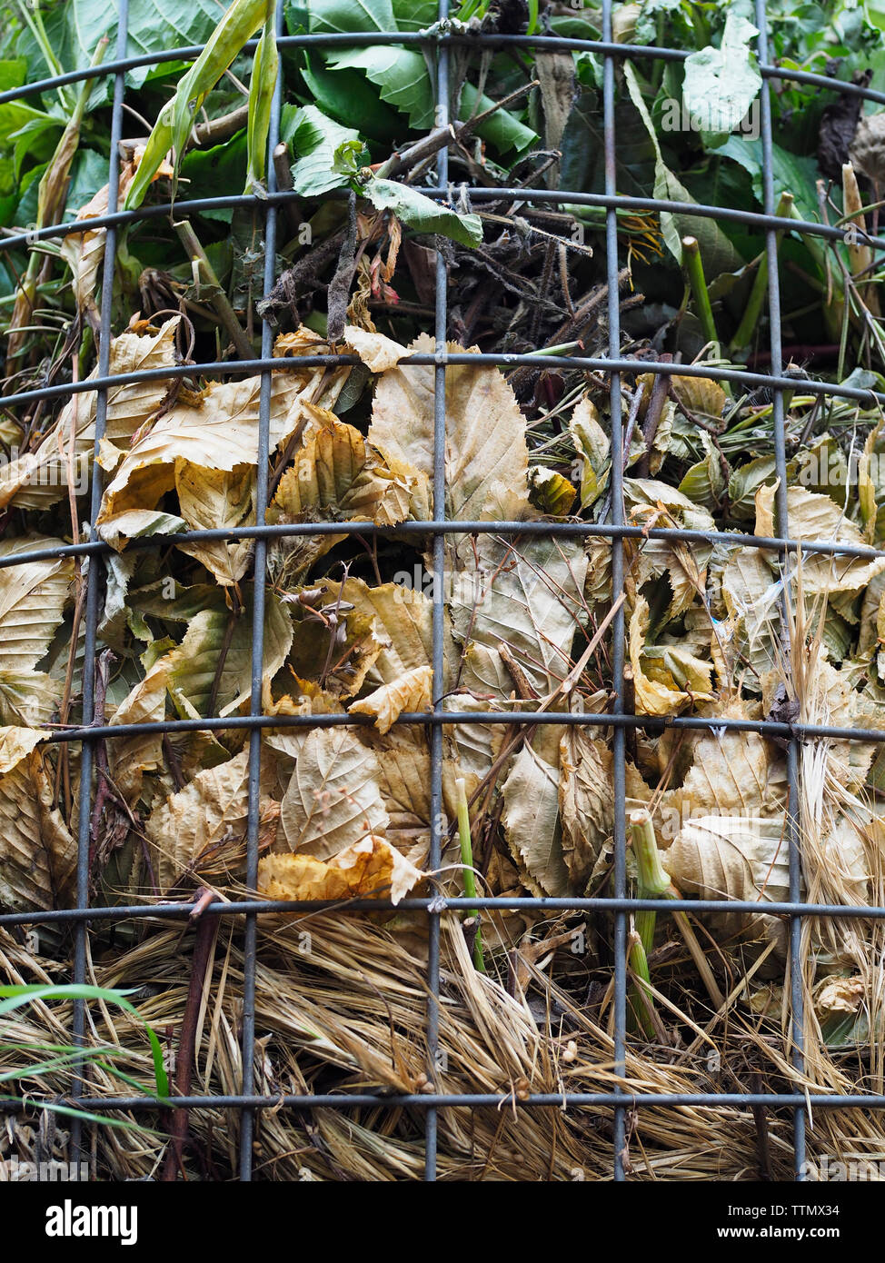 Offene Kompostierung (offene Miete) in einem Kleingarten in der Schweiz Stock Photo