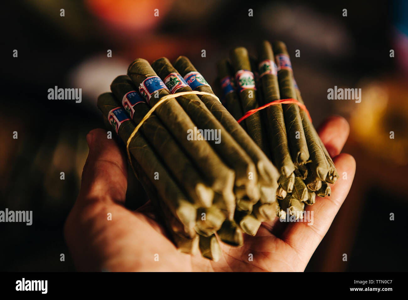 Cropped hand holding cigars - Stock Image