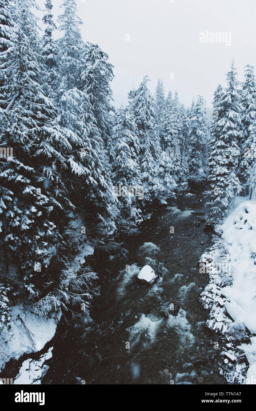 Snow covered trees on riverbank in forest - Stock Image