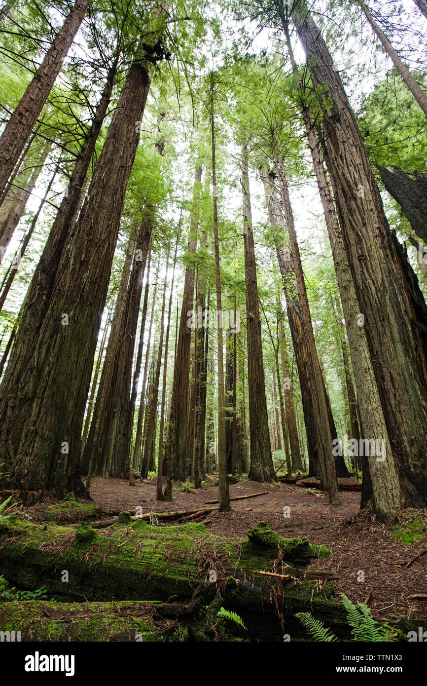Trees growing on field at Redwood National and State Parks Stock Photo