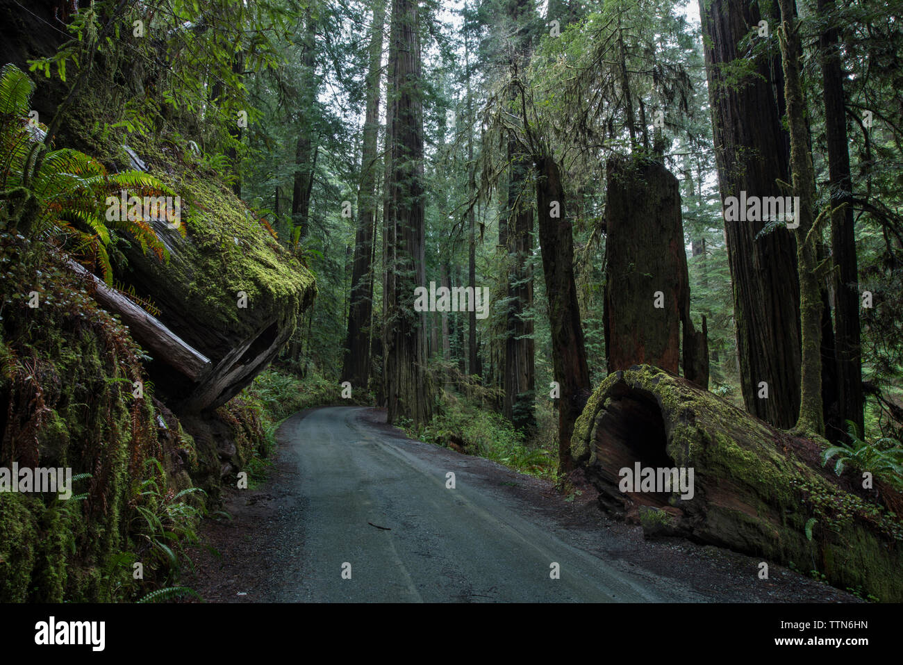 Road amidst forest at Jedediah Smith Redwoods State Park - Stock Image