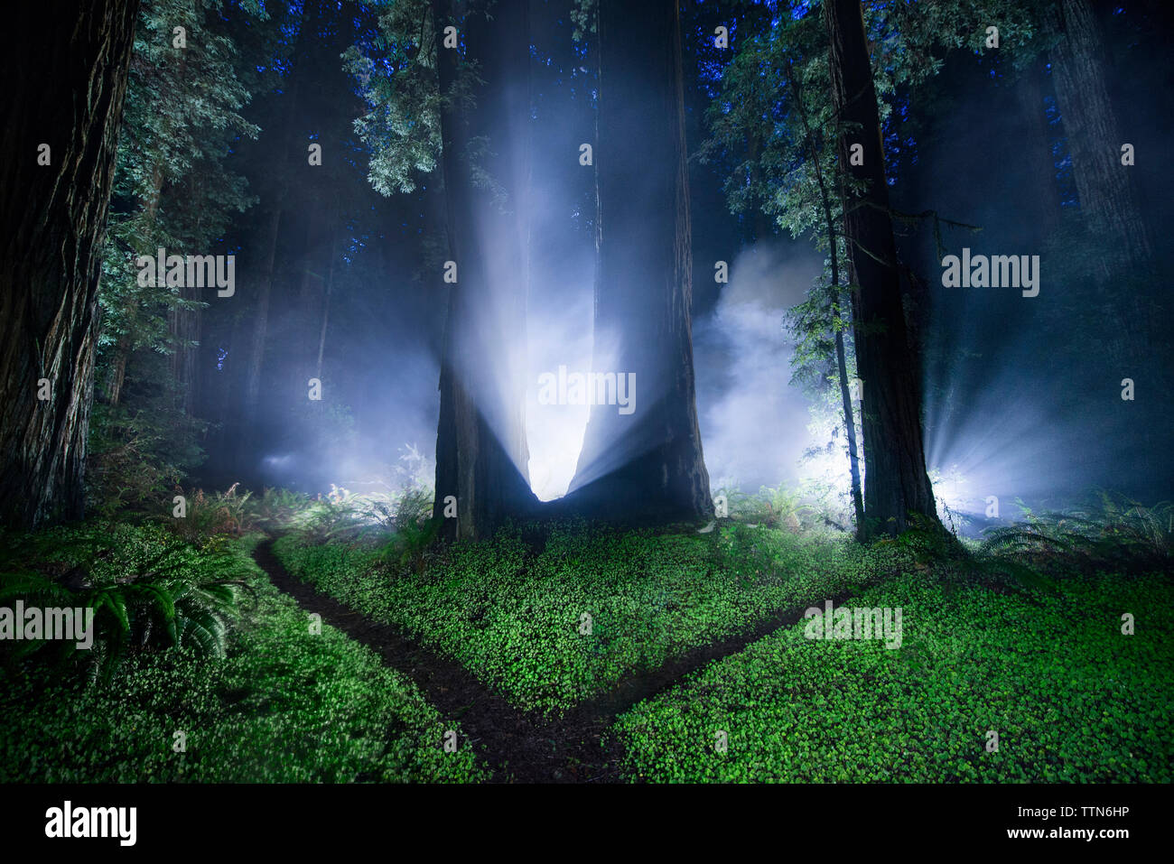 Tranquil view of forest at Jedediah Smith Redwoods State Park during night - Stock Image