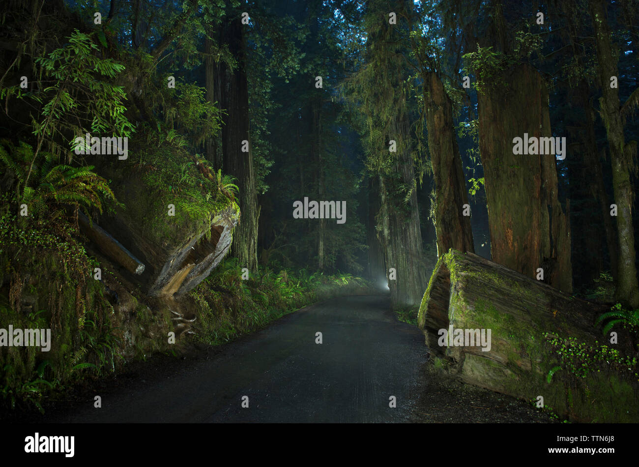 Road amidst forest at Jedediah Smith Redwoods State Park during dusk - Stock Image