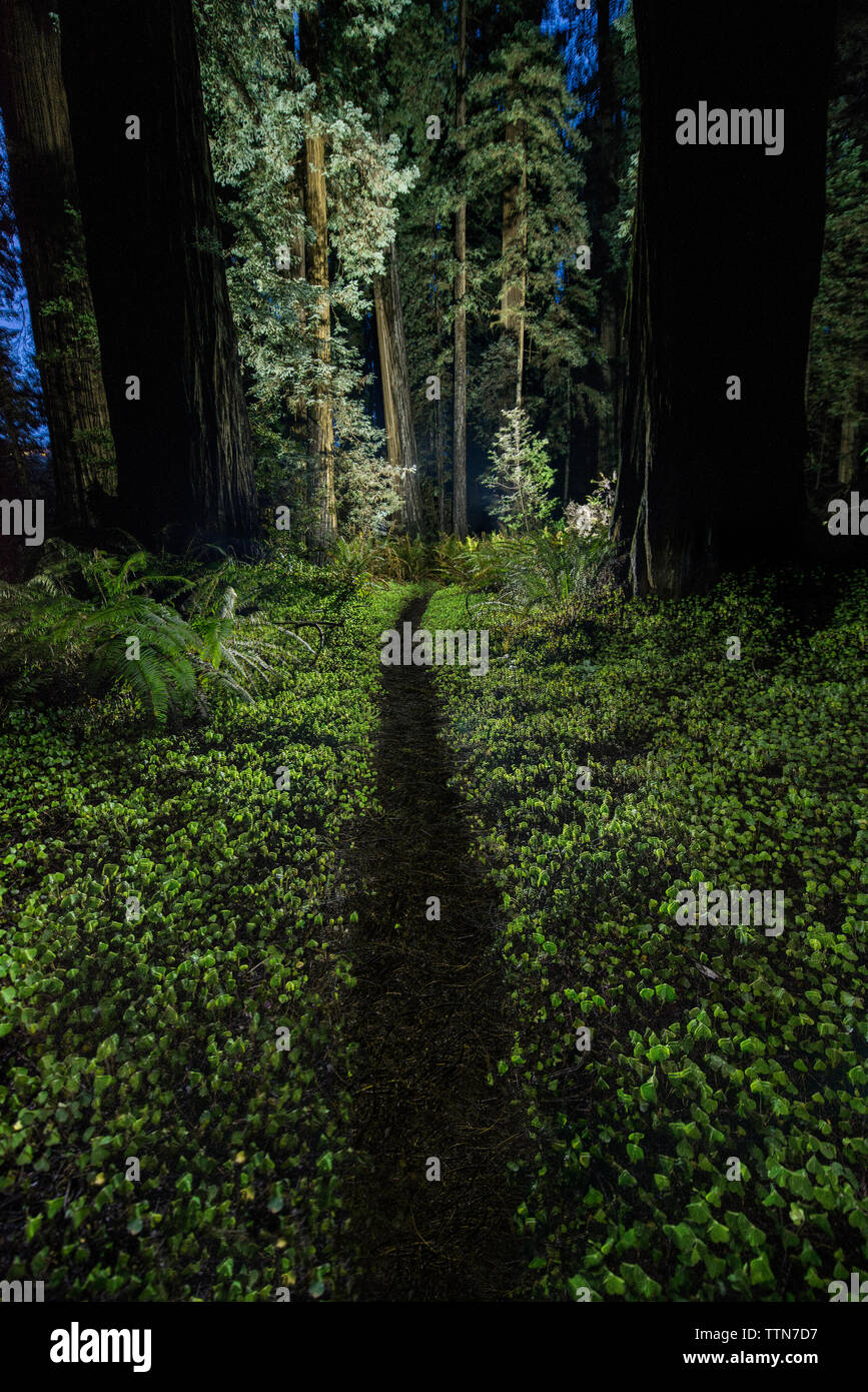 Trail amidst plants at Jedediah Smith Redwoods State Park during dusk - Stock Image