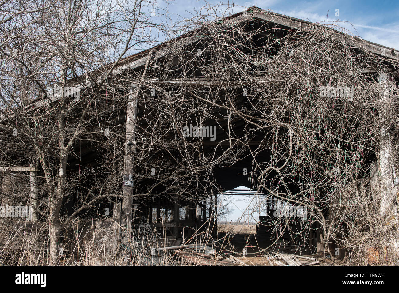 Abandoned wooden barn at farm by bare trees and dead plants - Stock Image