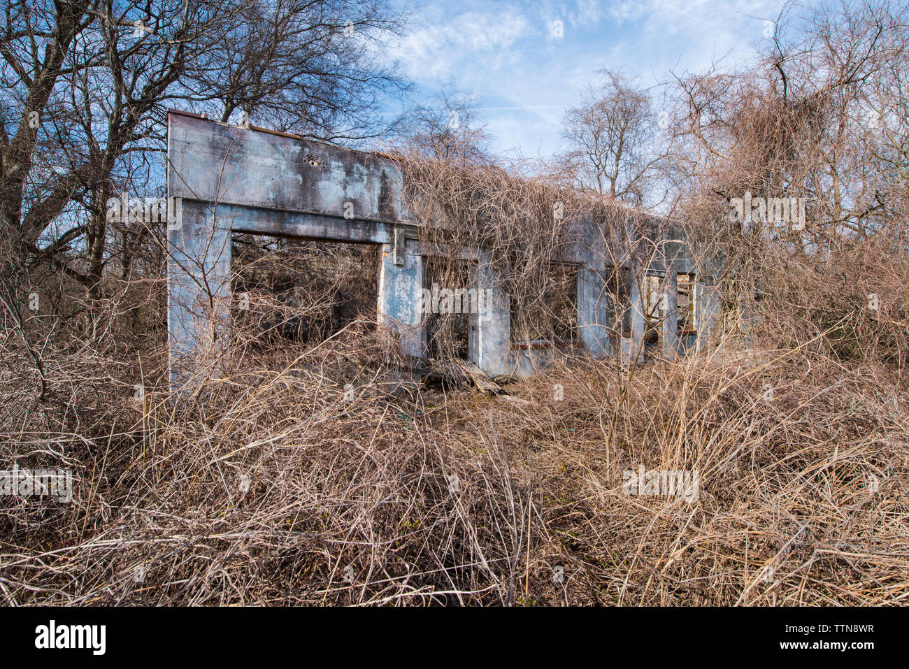Abandoned building by bare trees and dead plants in forest - Stock Image
