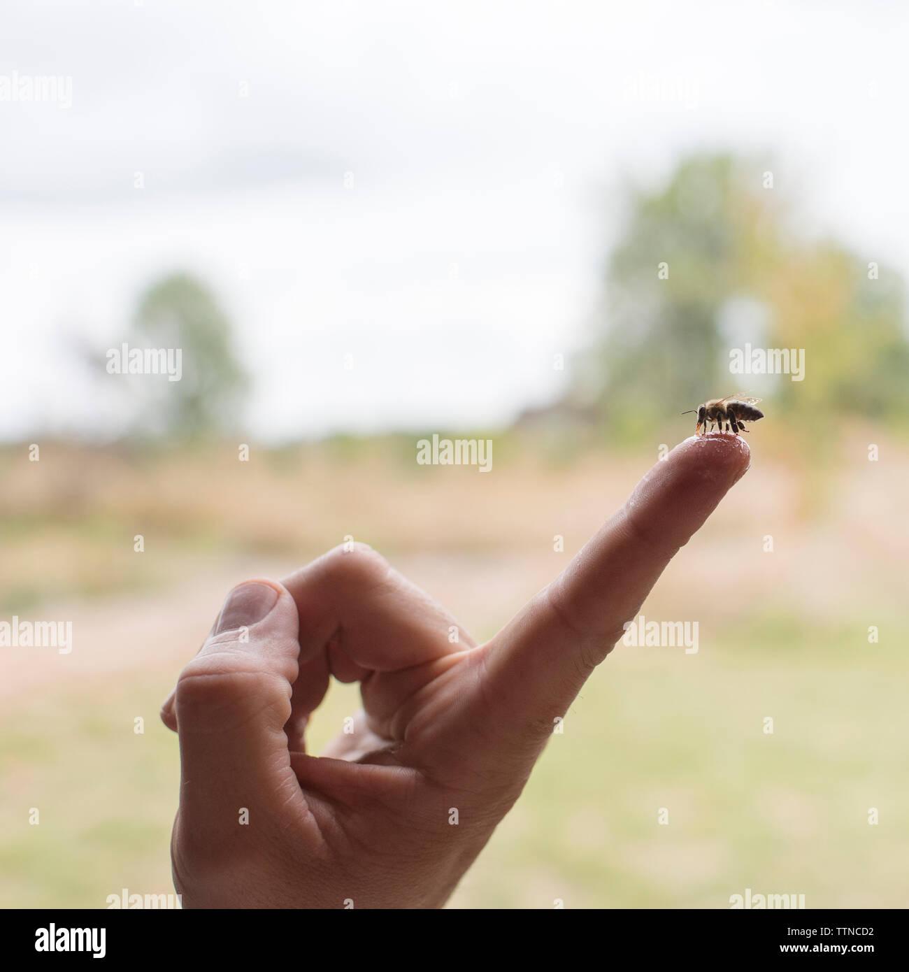 Close-up of bee feeding honey on man's index finger Stock Photo