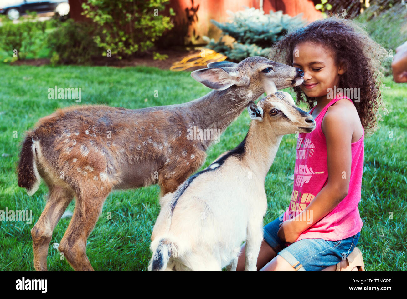 Fawn licking girl kneeling by kid goat on field - Stock Image