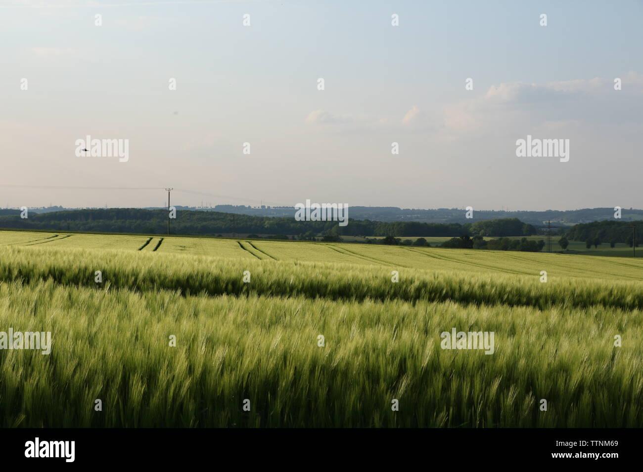 Naturlandschaft in Menden im Sauerland - Stock Image