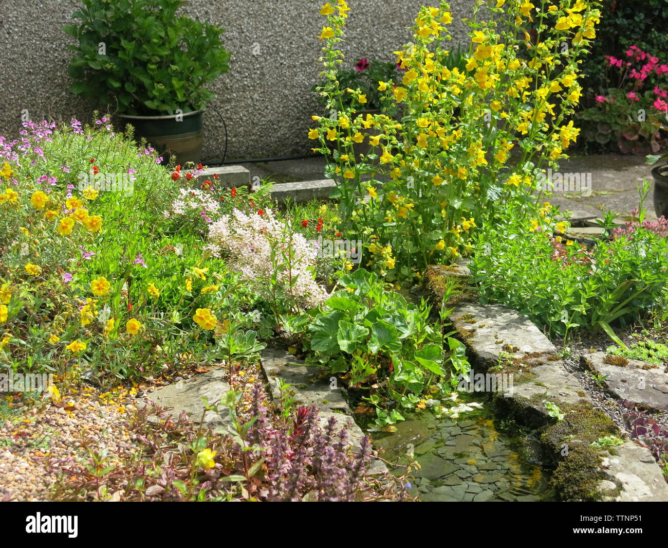 A small garden stream with running water provides a habitat for insects and birds, and a colourful array of rockery plants; a Scottish garden, June 19 - Stock Image