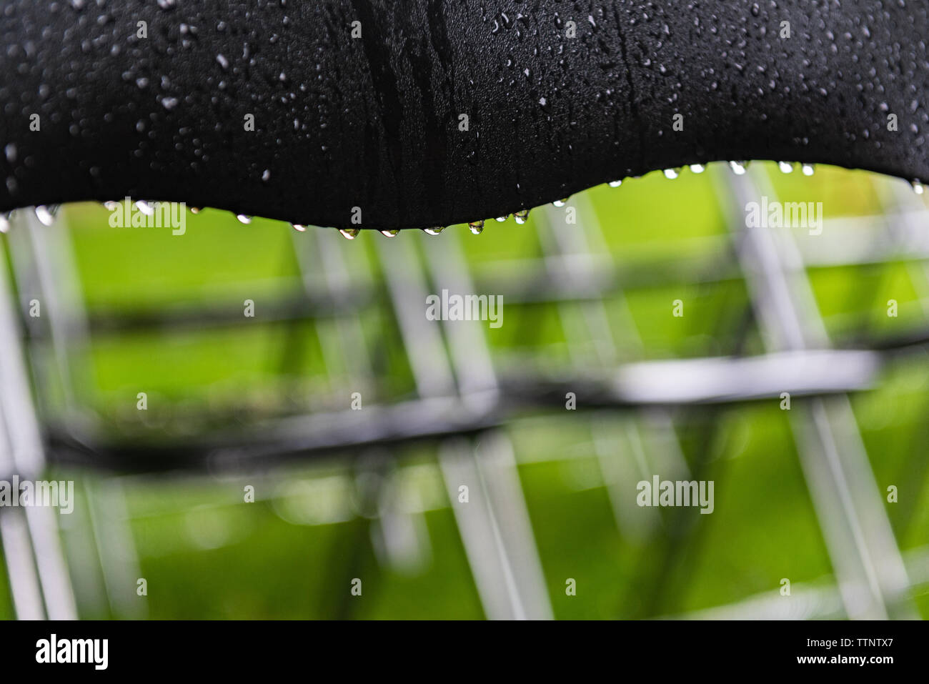 Black chair stand outside in the park in the rain. Empty auditorium, green grass, trees and chairs with water drops. - Stock Image