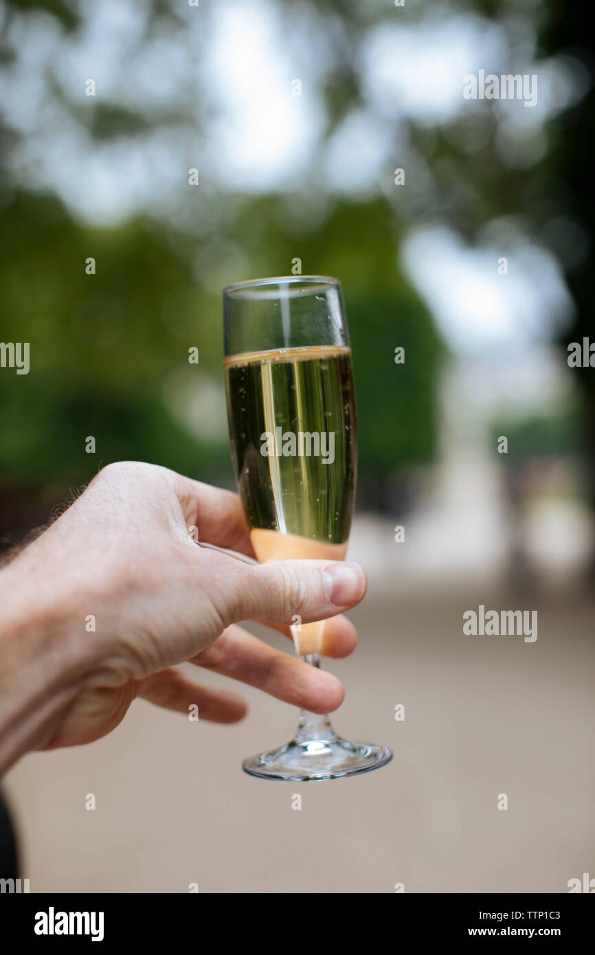 Cropped hand of man holding champagne flute at park - Stock Image
