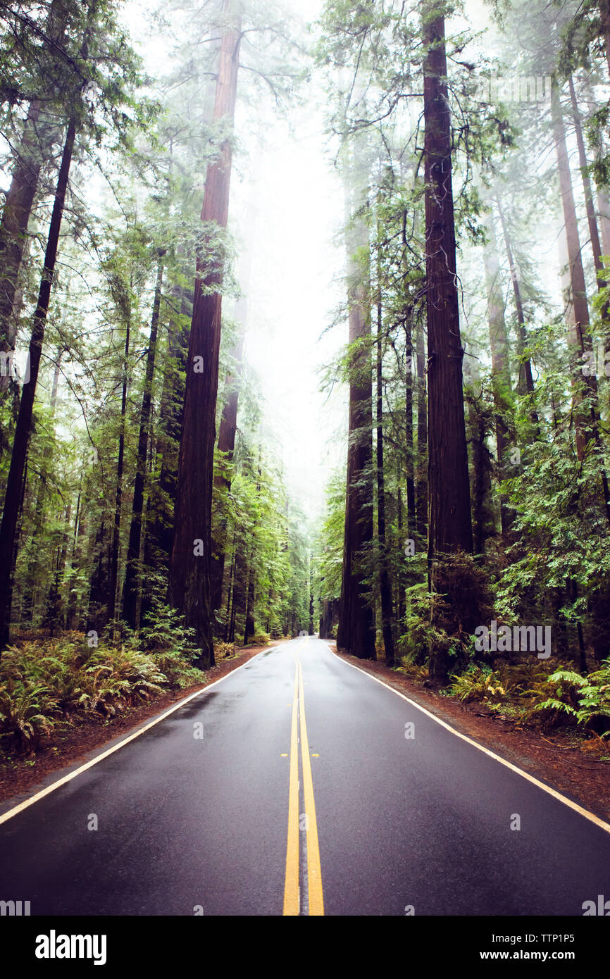 Road amidst redwood trees at state park - Stock Image