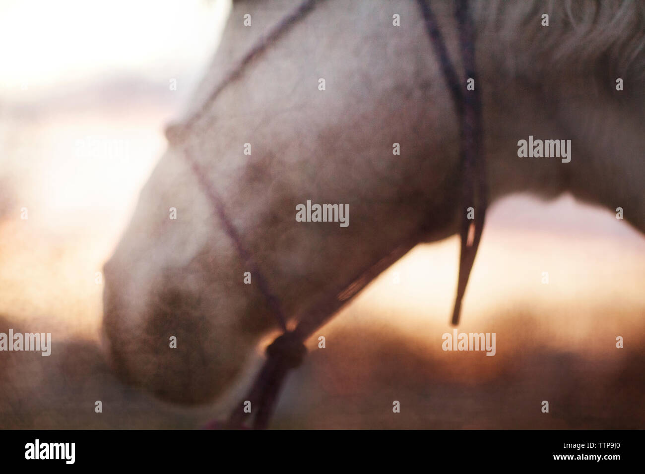 Close-up of horse on field against sky - Stock Image