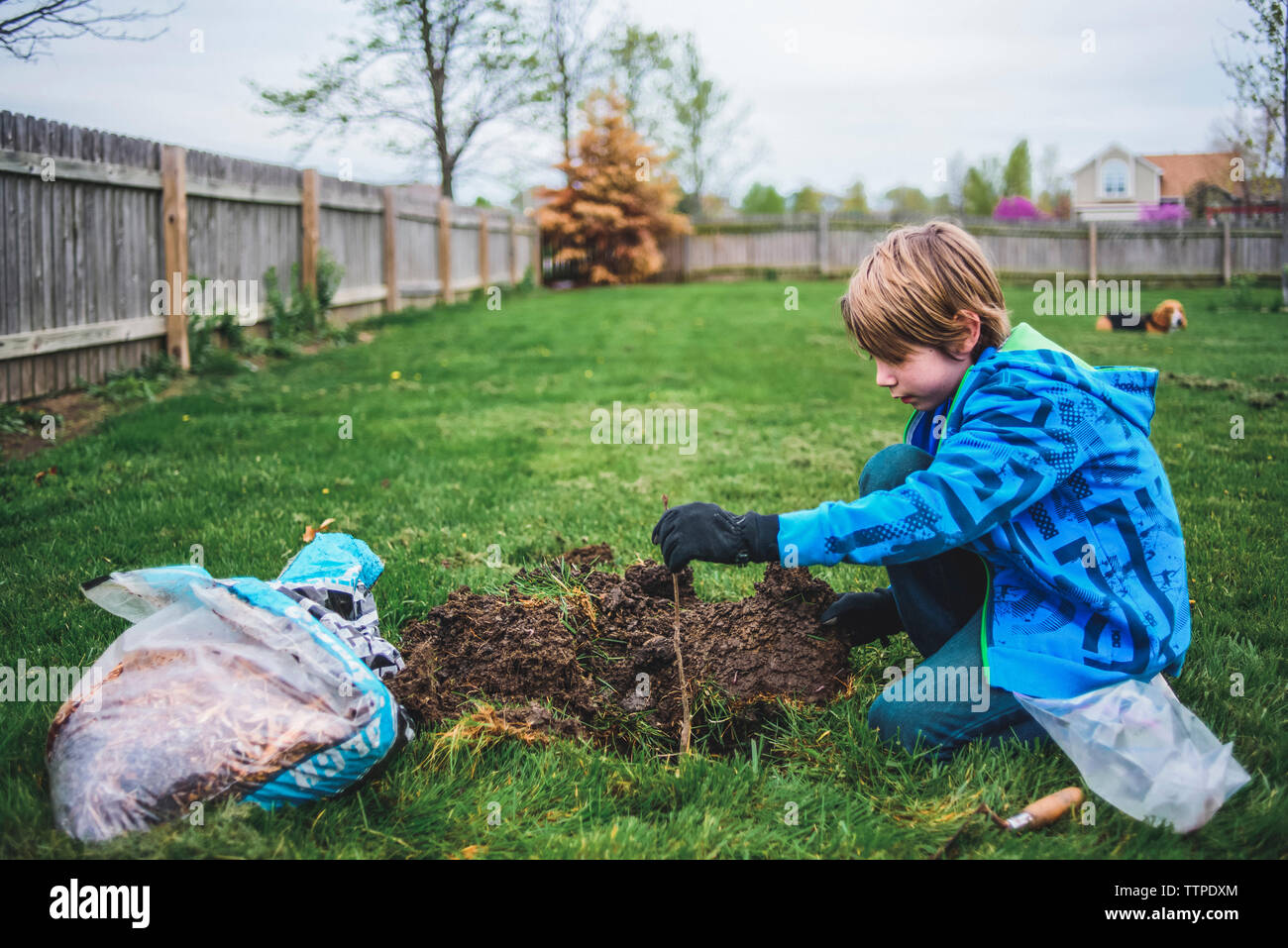 Side view of boy gardening while kneeling at yard with dog in background - Stock Image