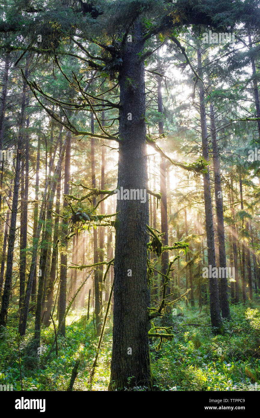 Trees and plants growing in Redwood National and State Parks Stock Photo