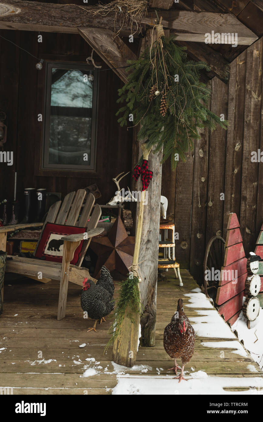 Hens on porch by decorated oar during Christmas - Stock Image