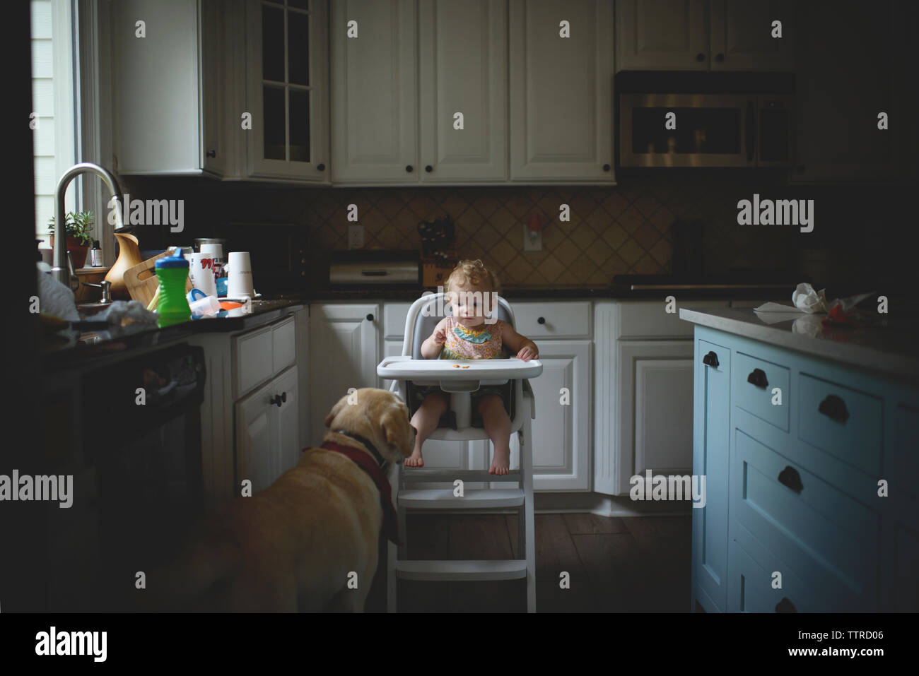 Baby Girl Looking At Dog While Sitting On High Chair In Kitchen