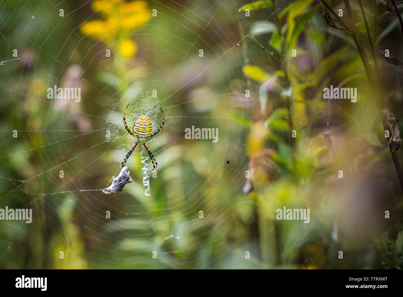 Close-up of spider on wed - Stock Image