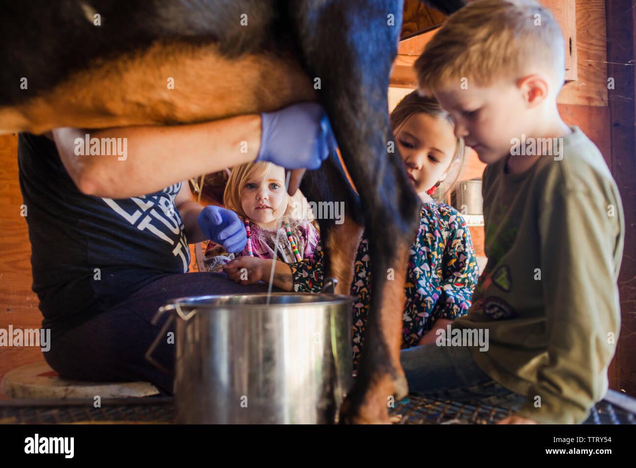 Children looking at farmer milking goat at farm - Stock Image