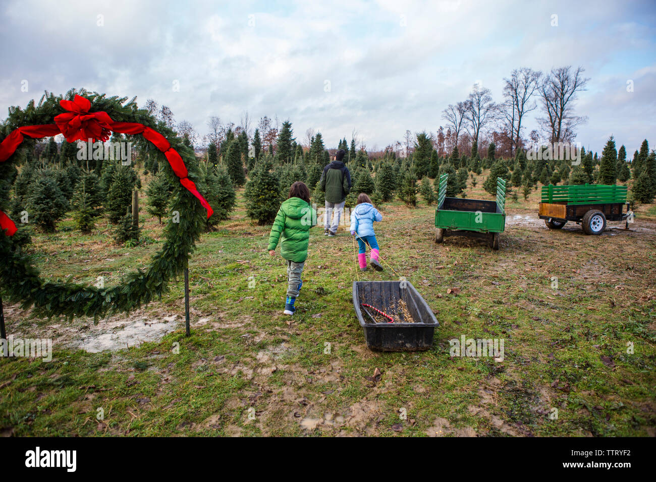 Rear view of family walking in pine tree farm against cloudy sky - Stock Image
