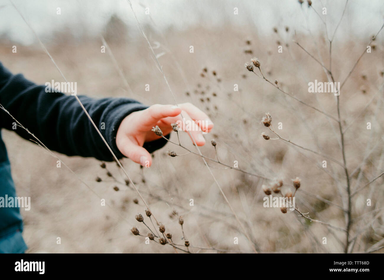 Cropped hand of boy touching dead plants at field - Stock Image