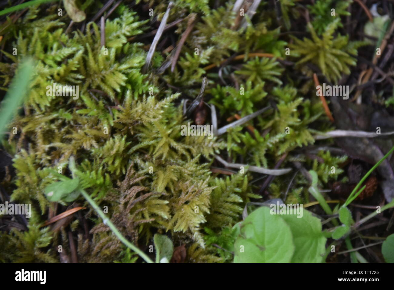 Moss growing on the forest floor Stock Photo