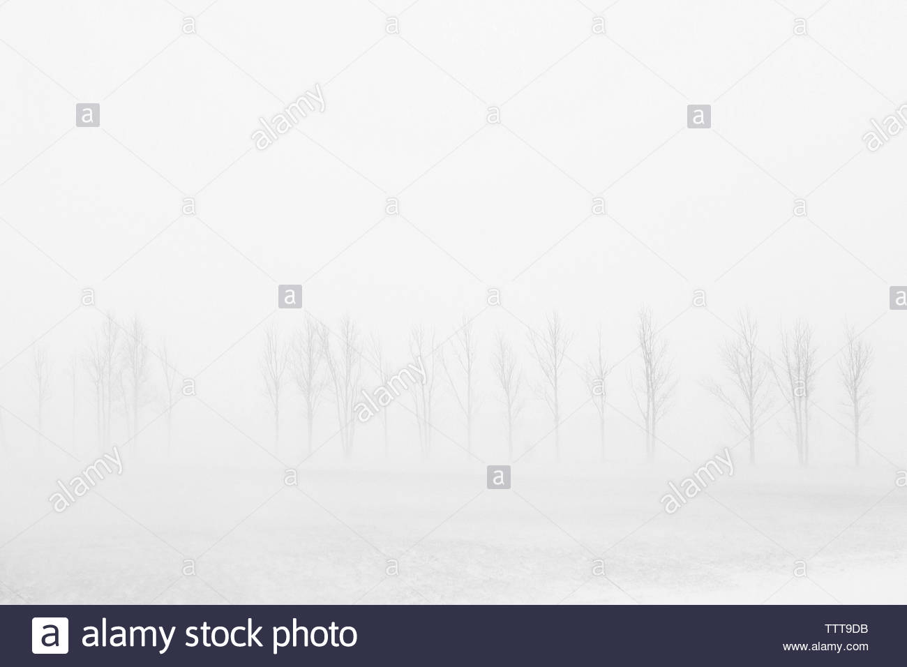 Scenic view of bare trees during blizzard - Stock Image