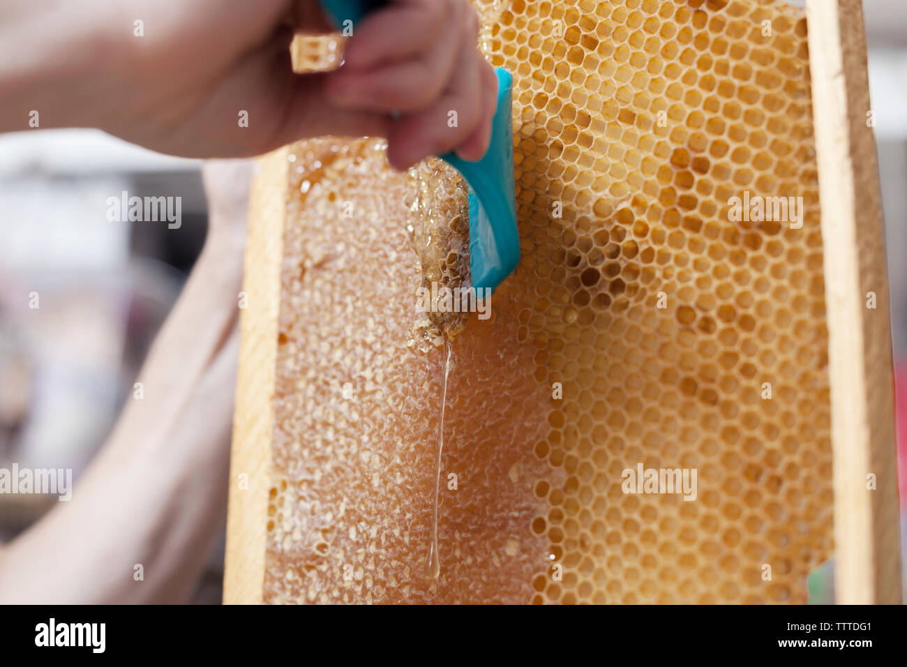 Close-up of hand cleaning beehive frame - Stock Image