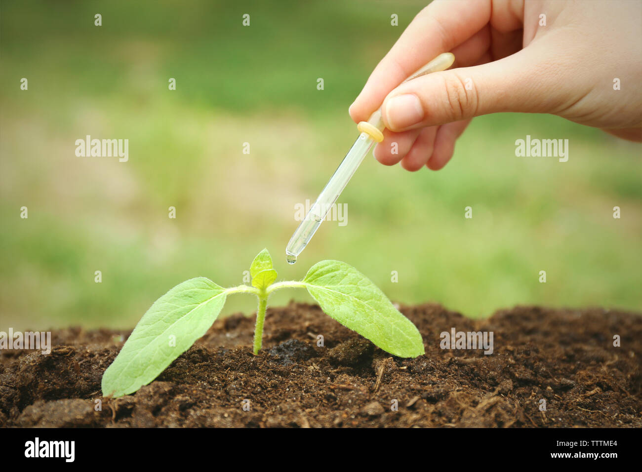 Woman hand watering plant in garden - Stock Image