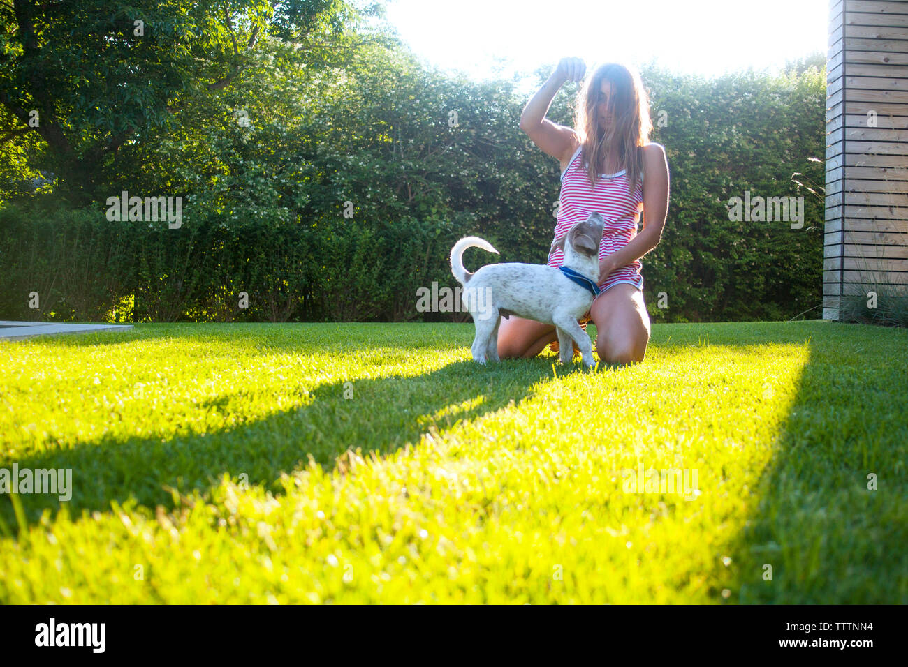 Woman kneeling while playing with dog on grassy field at backyard - Stock Image