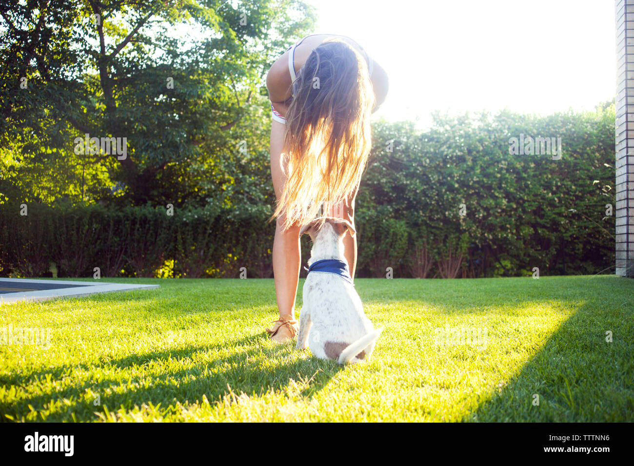 Woman bending over dog on grassy field at backyard - Stock Image