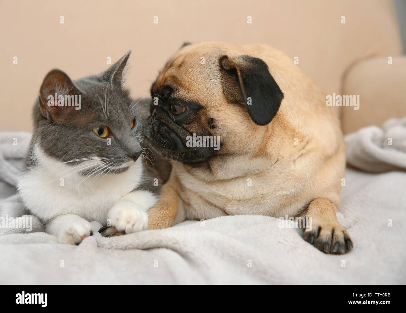 Adorable Pug And Cute Cat Lying Together On Sofa Stock Photo Alamy