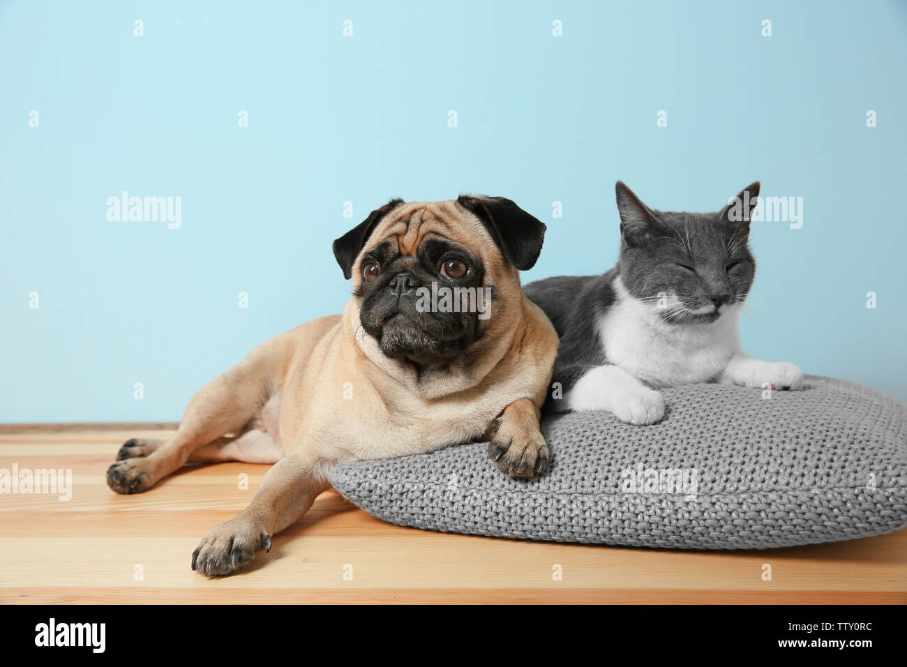 Adorable Pug And Cute Cat Lying Together On Pillow Stock Photo Alamy
