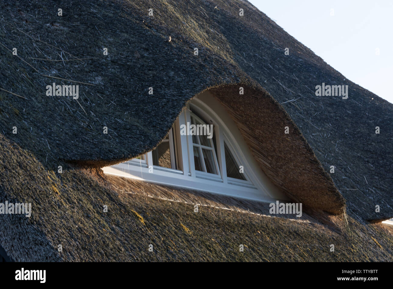 Houses on the Fischland-Darß with a thatched roof - Stock Image