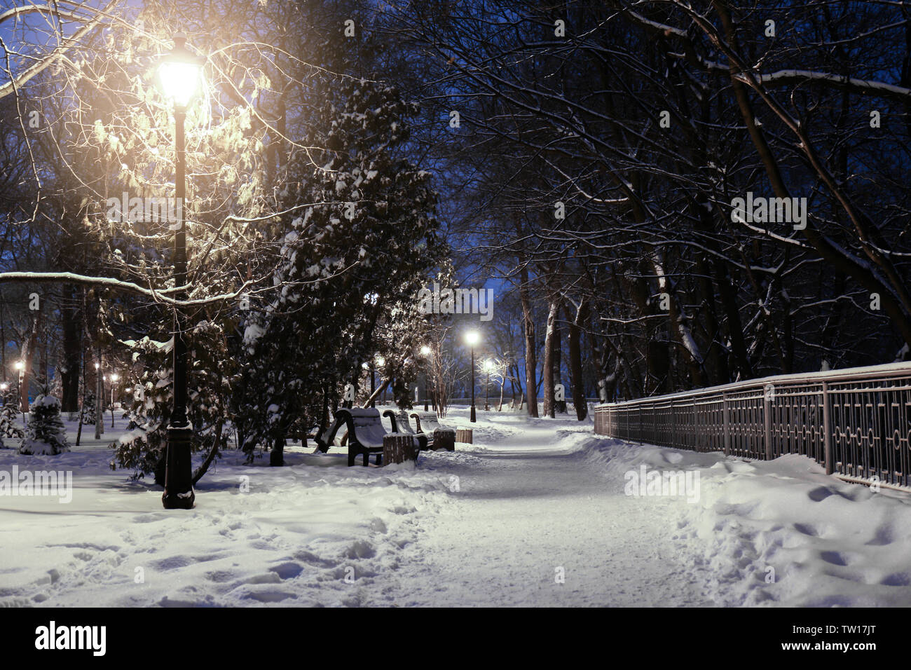 Beautiful winter landscape with snowy alley in evening - Stock Image
