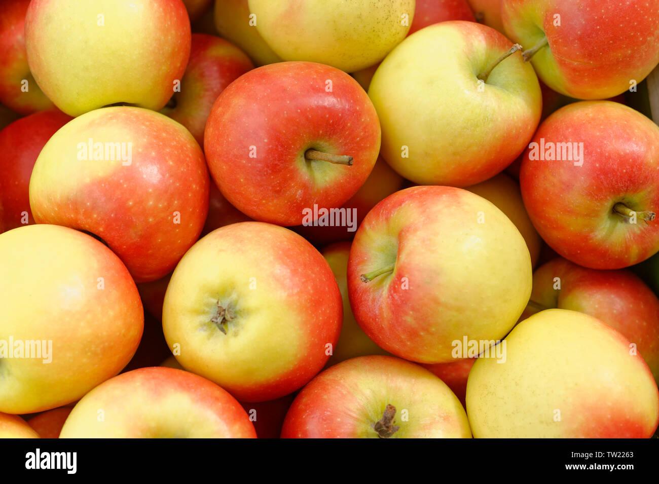 Kanzi Sweet Apples - Stock Image