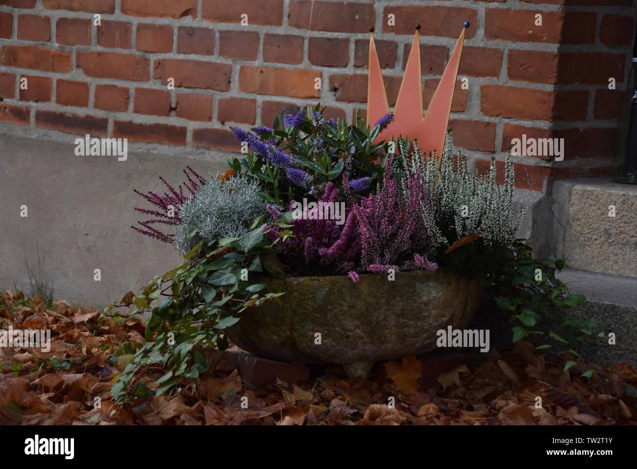 Blumentopf vor einer Hauswand mit Laub im Vordergrund - Stock Image