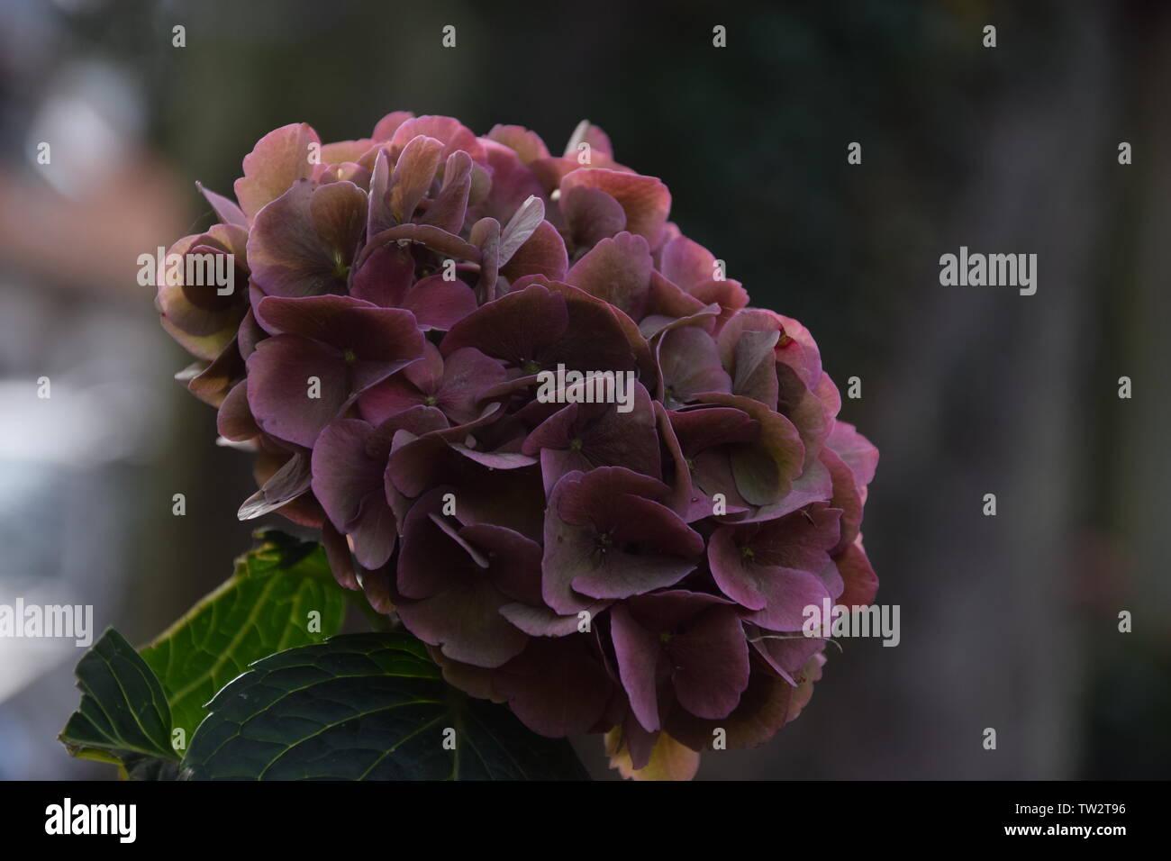 Makro Aufnahme einer Blume im garten mit blurred Background - Stock Image