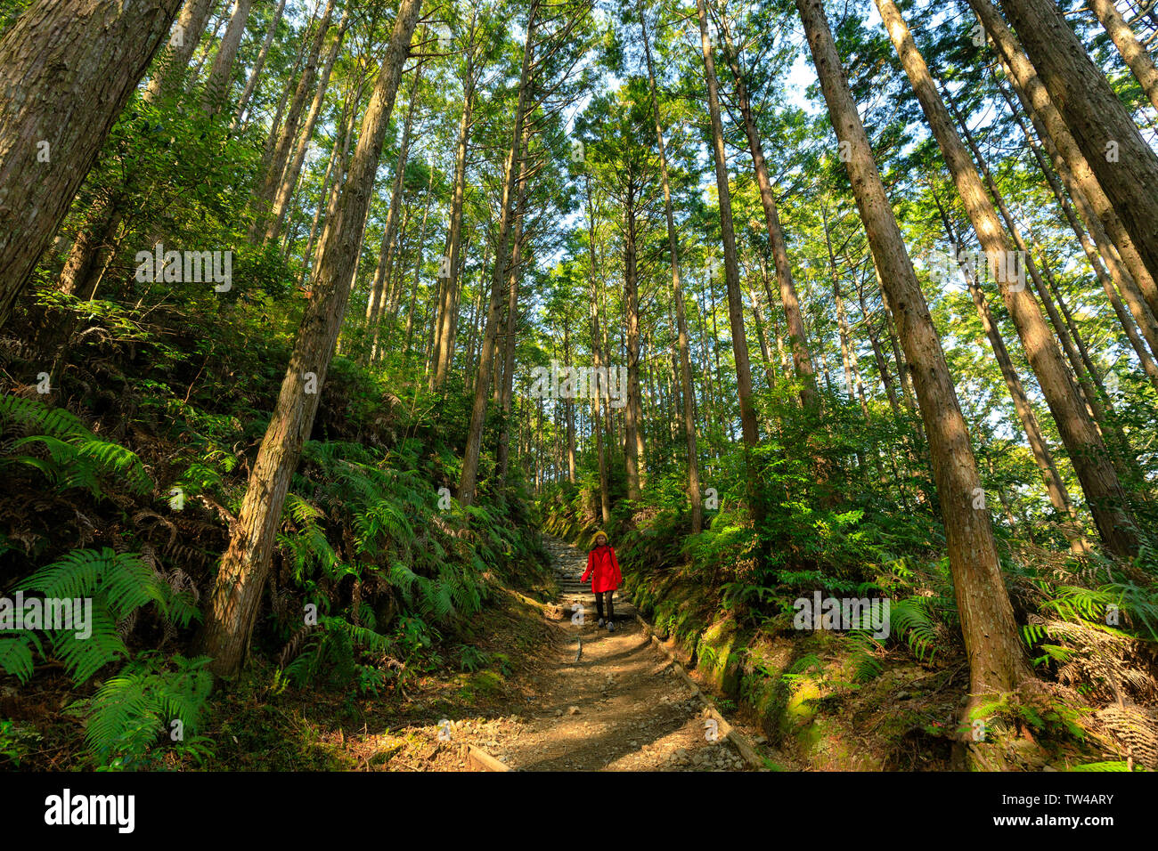 Asian woman in red coat, trekking in the Kumano Kodo forest, Japan - Stock Image