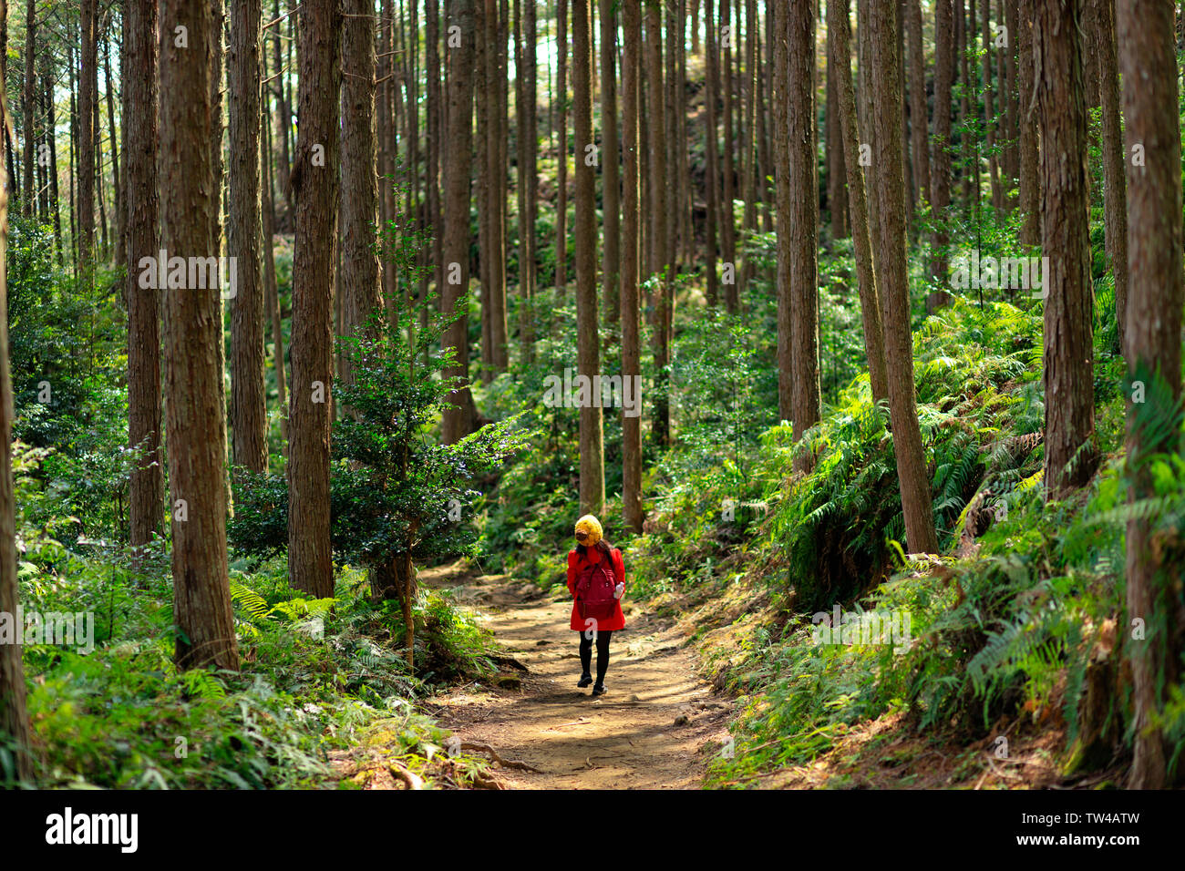 Woman in red coat, trekking in the Kumano Kodo forest, Japan - Stock Image