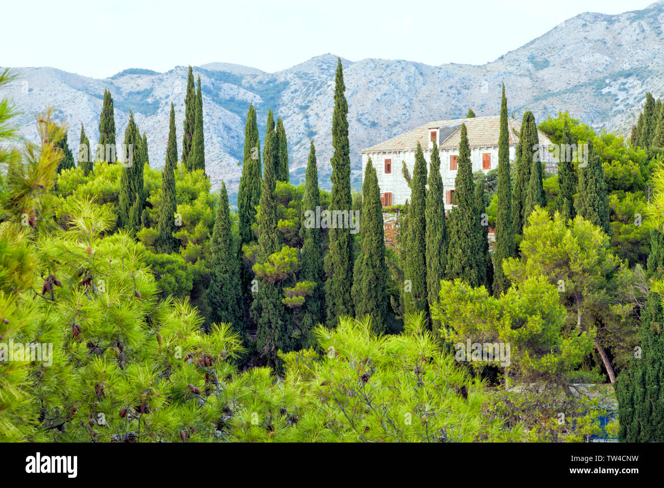 Old country villa on a hill in Croatia, surrounded by cypress and pine trees, with mountains in the background, lush summer landscape . Stock Photo