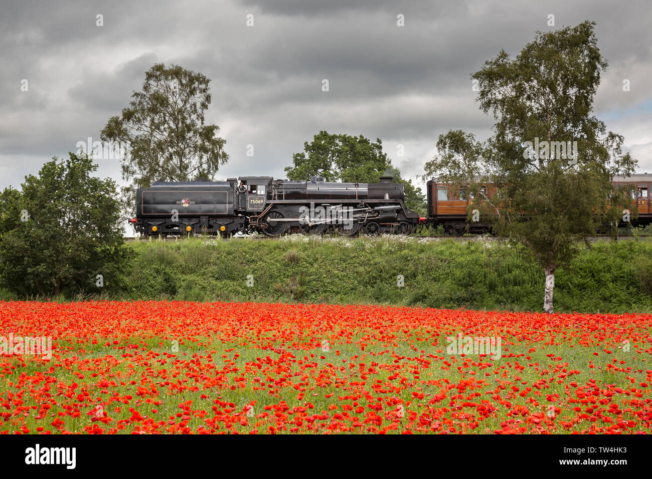 Side view of vintage UK steam train in a countryside landscape scene passing fields of red poppies. - Stock Image