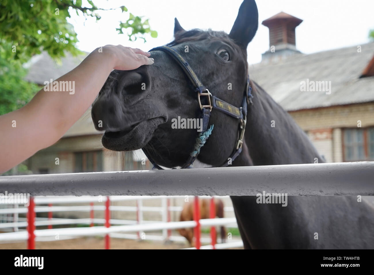 Female hand stroking horse. Concept of volunteering at animal shelter - Stock Image