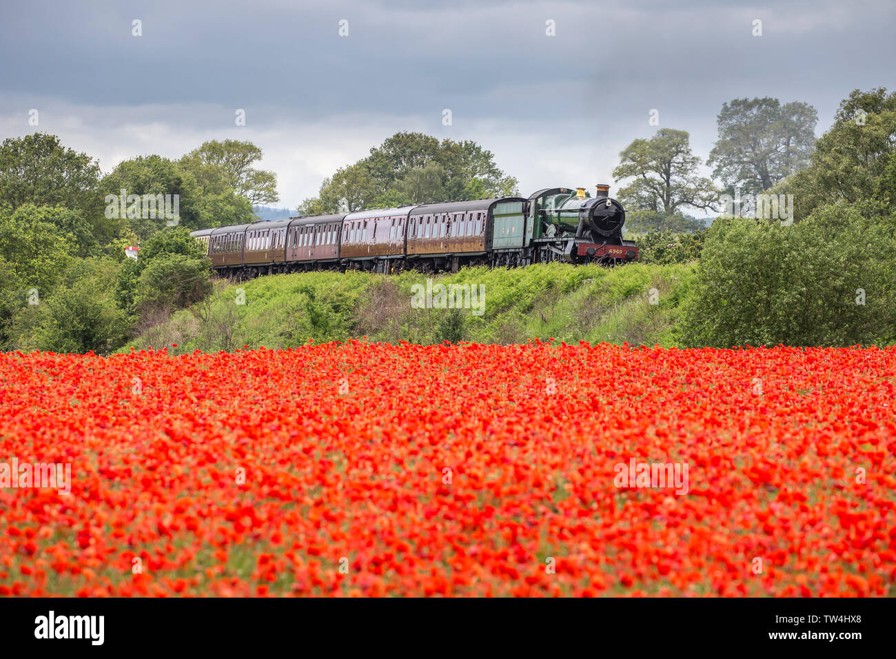 Vintage UK steam train, front, passing through beautiful English countryside. British landscape scene with meadow of wild, red poppies in foreground. - Stock Image