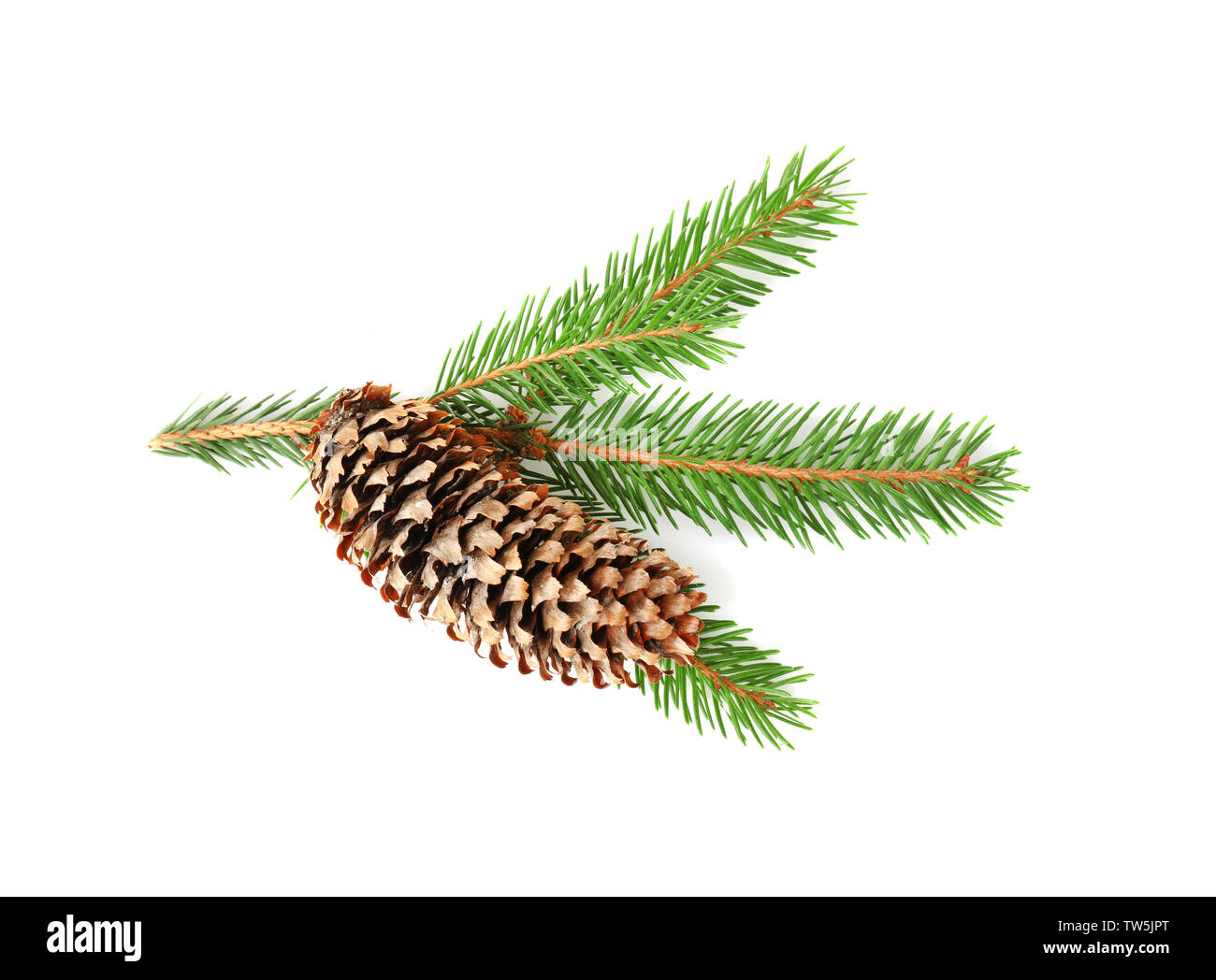 Branch of fir tree and cone on white background Stock Photo