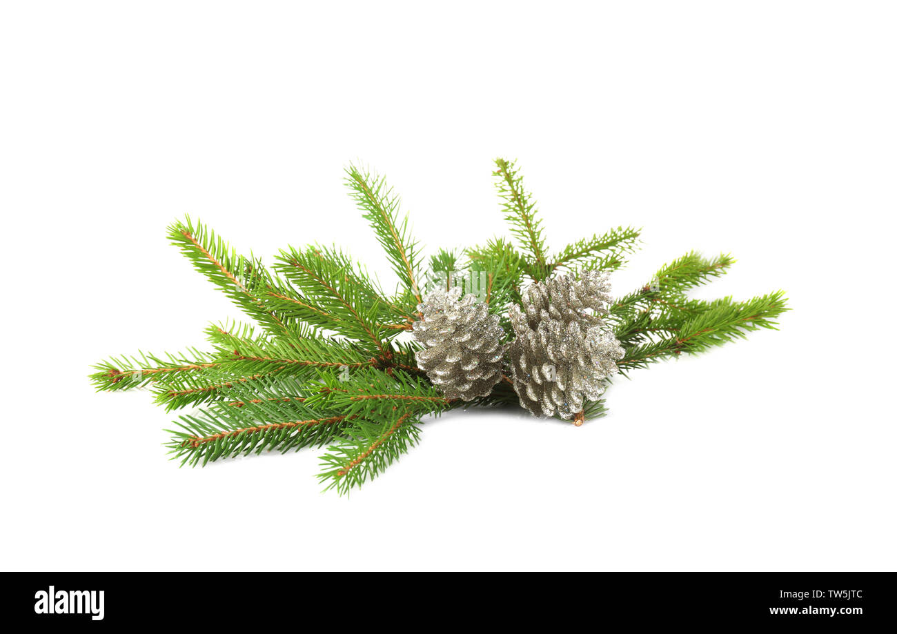 Branches of fir tree and cones on white background - Stock Image