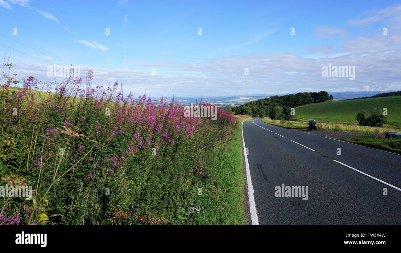 Colorful flowers on the roadside - Stock Image
