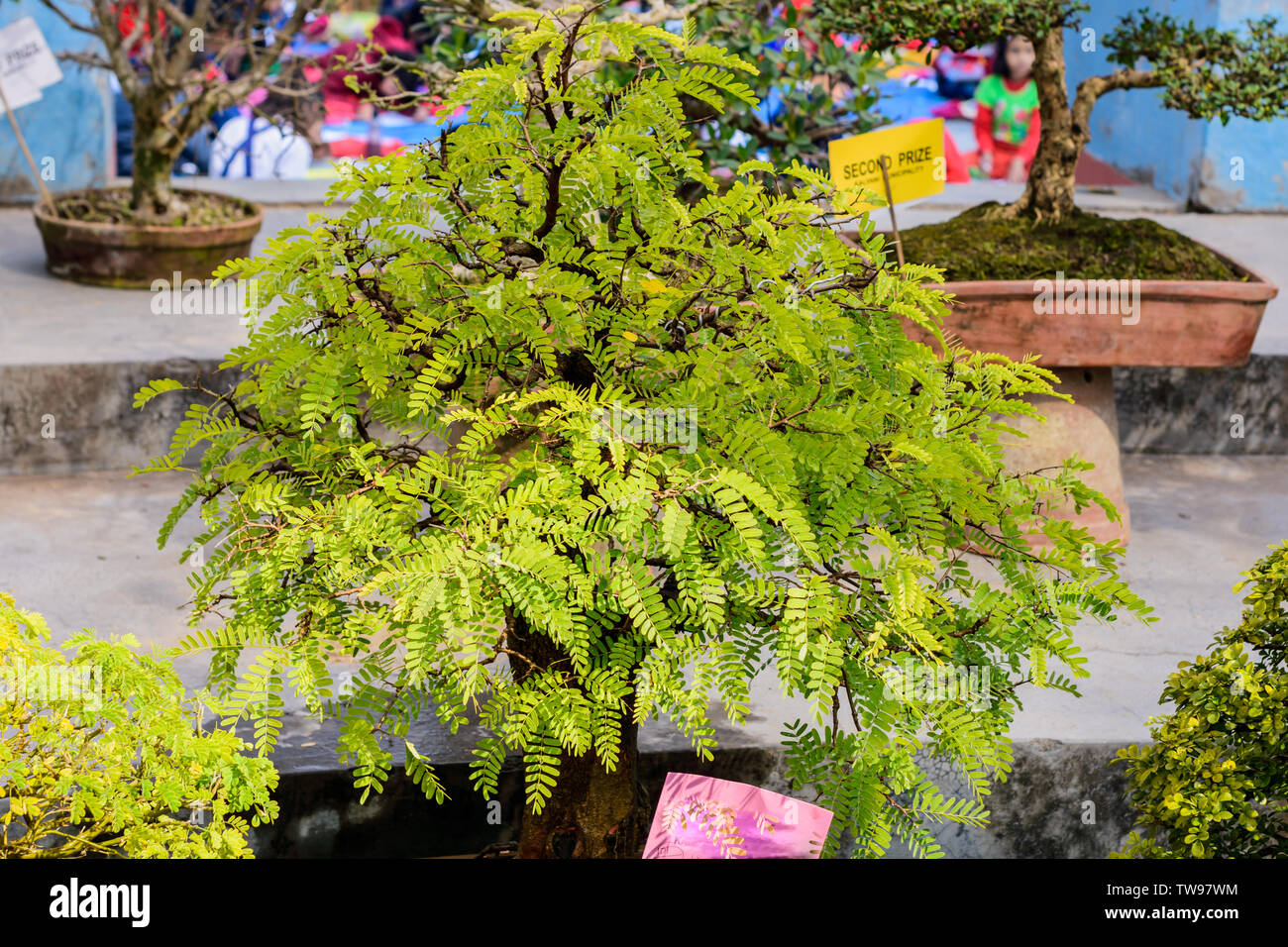 Fern Tree High Resolution Stock Photography And Images Alamy