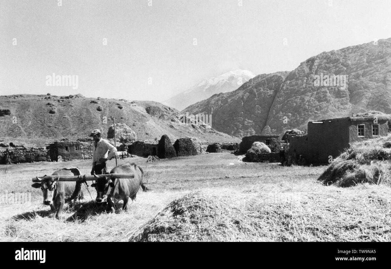 wheat beating, zangezur mountains, ararat on the bottom, 1961 - Stock Image